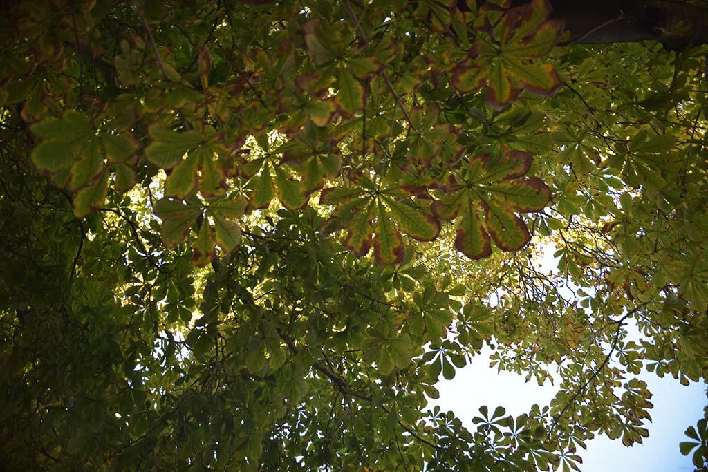 Dichtes Blätterdach schützt vor steigenden Temperaturen