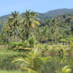"Online-Workshop ""Klimakrise & tropische Regenwälder"" // Fotografik symbolisch Pixabay"